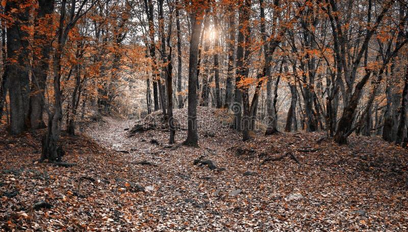 Дорога в лесе осени стоковое фото