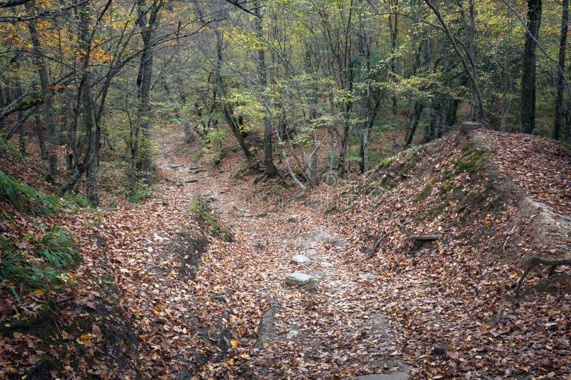 Дорога в лесе осени стоковая фотография