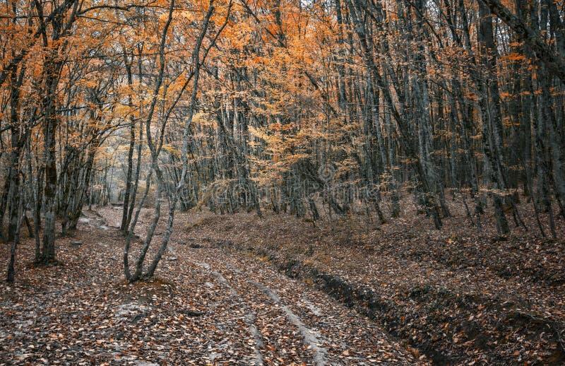 Дорога в лесе осени стоковые изображения