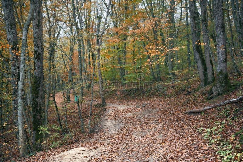 Дорога в лесе осени стоковые изображения rf