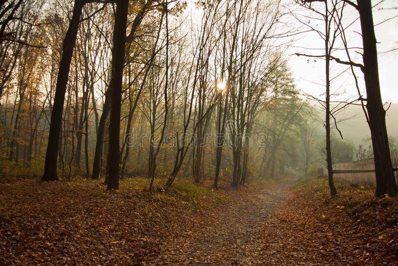 Дорога в лесе с обнаженными стволами дерева, яркими желтыми и оранжевыми упаденными листьями, предыдущие лучи солнца получает чер стоковые фотографии rf