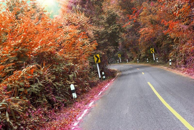 Дорога в лесе с поворотом вышла знак уличного движения, влияние фильтра стоковое изображение