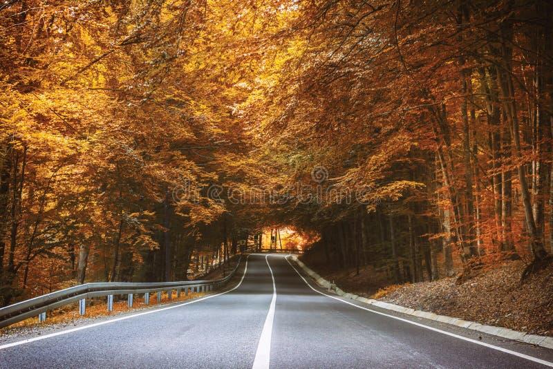 Дорога в осени стоковые фото