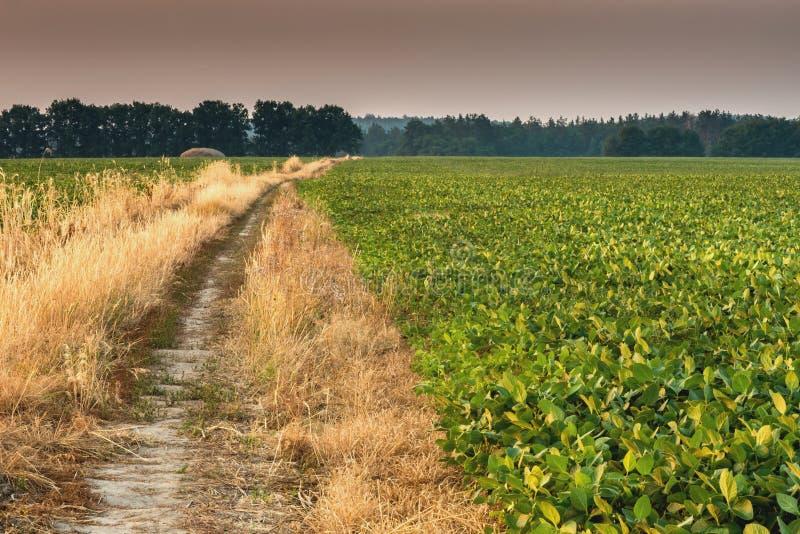 Дорога вдоль фасоли поля стоковое изображение rf