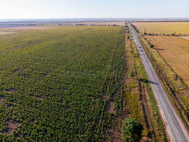 Дорога в поле с солнцецветами r стоковое изображение rf