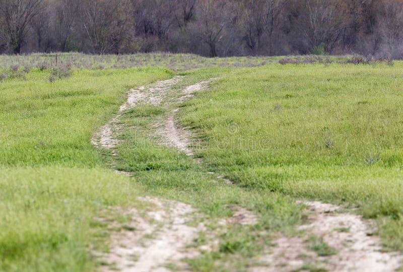 Дорога в поле стоковое изображение