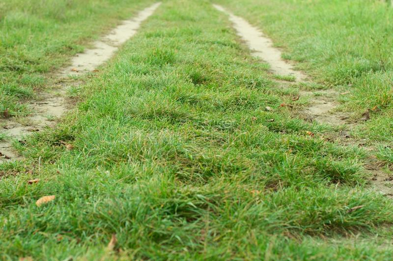 Дорога в поле с зеленой травой стоковые фотографии rf