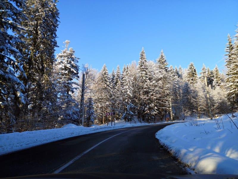Дорога в пуще зимы стоковые изображения rf