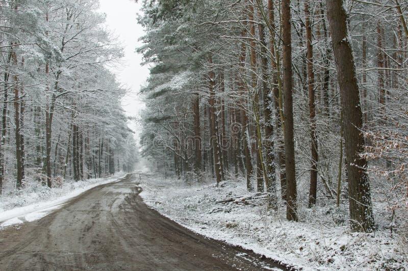 Дорога в пуще стоковая фотография rf
