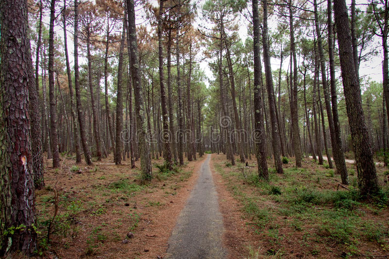 Download Дорога в пуще стоковое изображение. изображение насчитывающей environment - 40582717