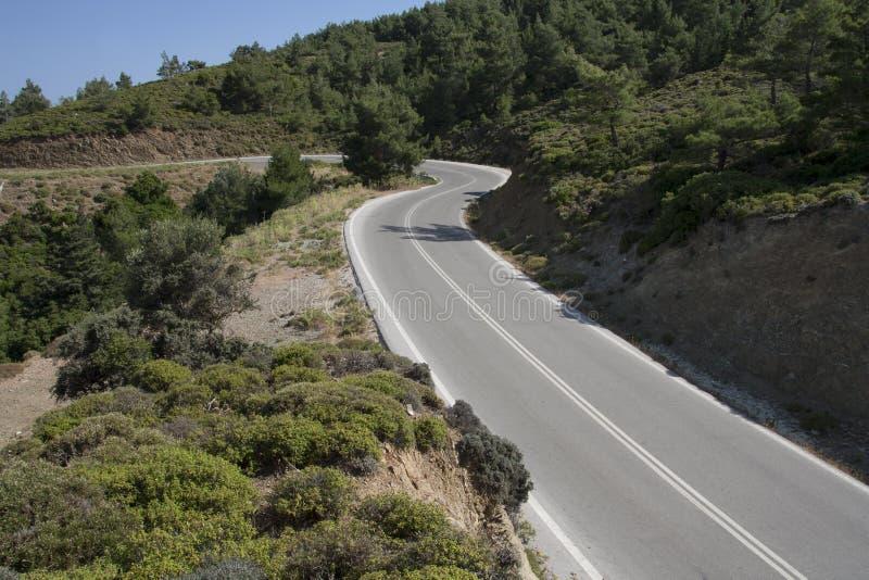 Дорога в пуще стоковое изображение rf