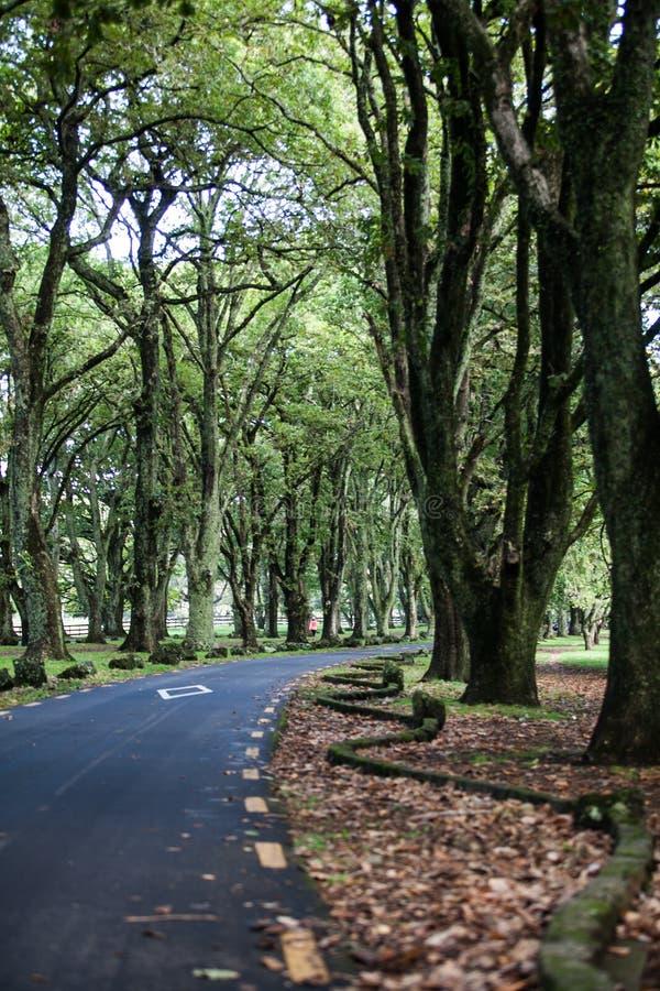 Дорога в саде Новой Зеландии стоковая фотография