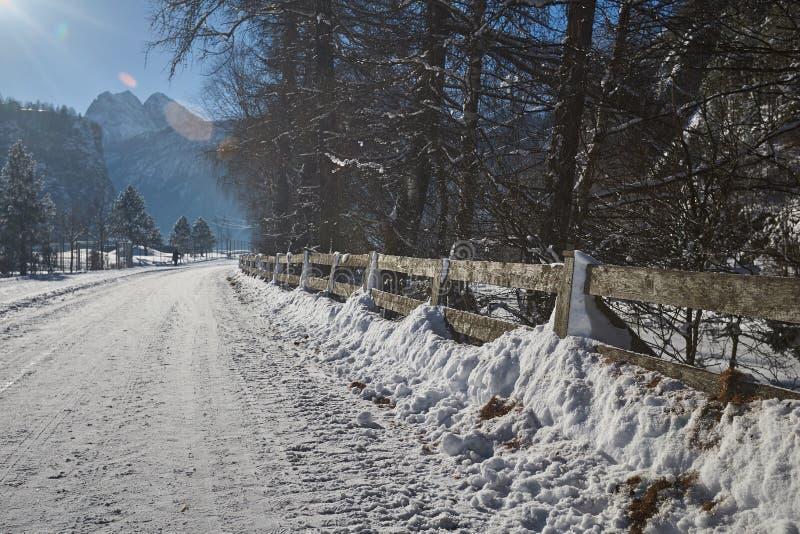 Дорога в середине coniferous леса стоковое изображение