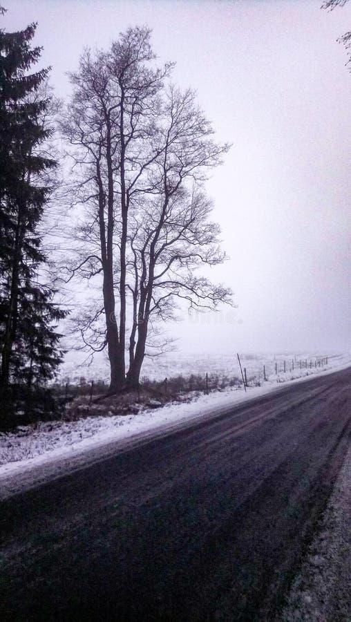 Дорога в тумане в зиме стоковая фотография rf