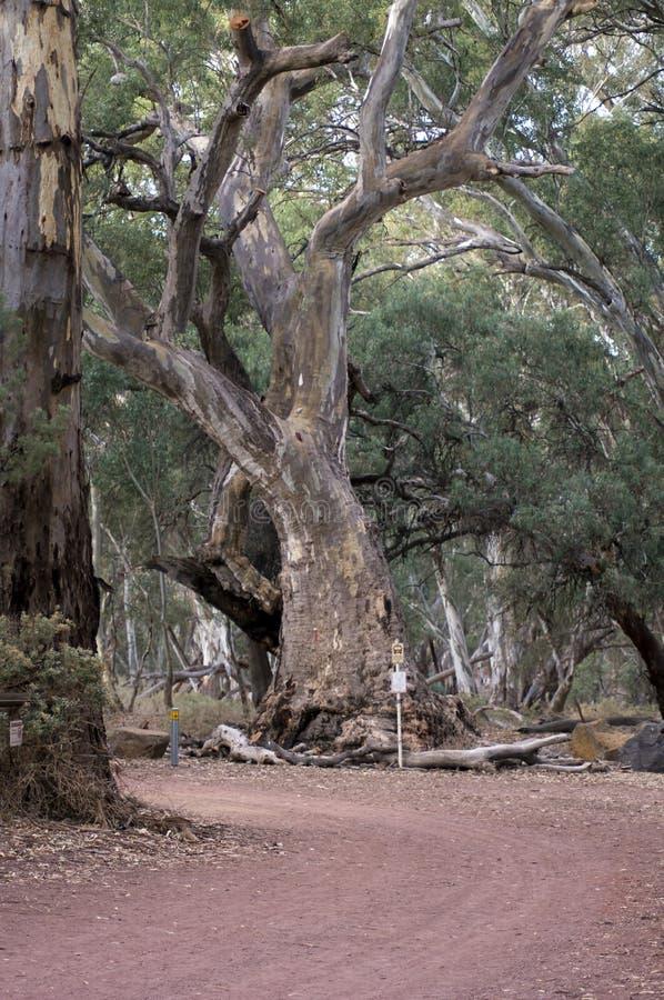 Дорога в фунт Wilpena от курорта, SA, Австралии стоковое изображение