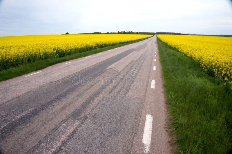 Дорога в flowerfield стоковые фотографии rf