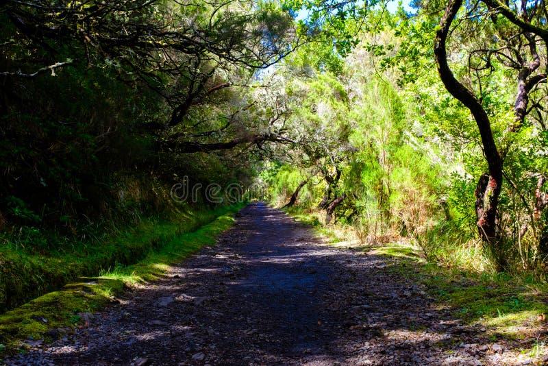Дорога горы в Мадейре стоковое фото