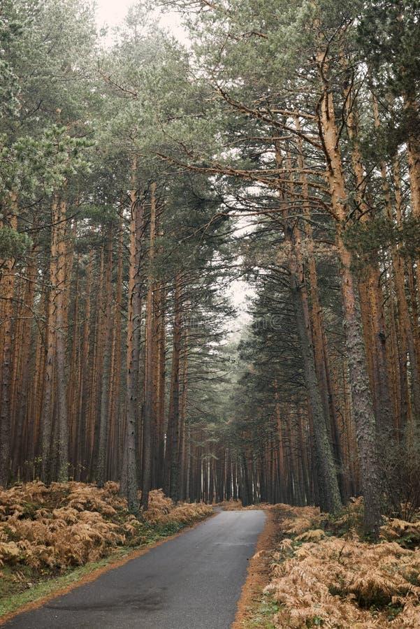 Дорога горы через лес на осени стоковые фото