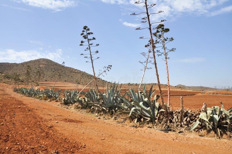 Дорога гравия в национальном парке плащи-накидк Gata (Испании) стоковая фотография rf