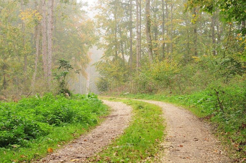 Дорога гравия через туманный лес стоковые фото