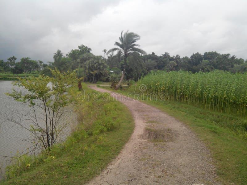 Дорога деревни стоковые изображения rf