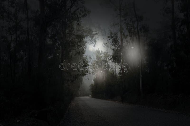 Дорога леса в ноче полнолуния стоковая фотография rf