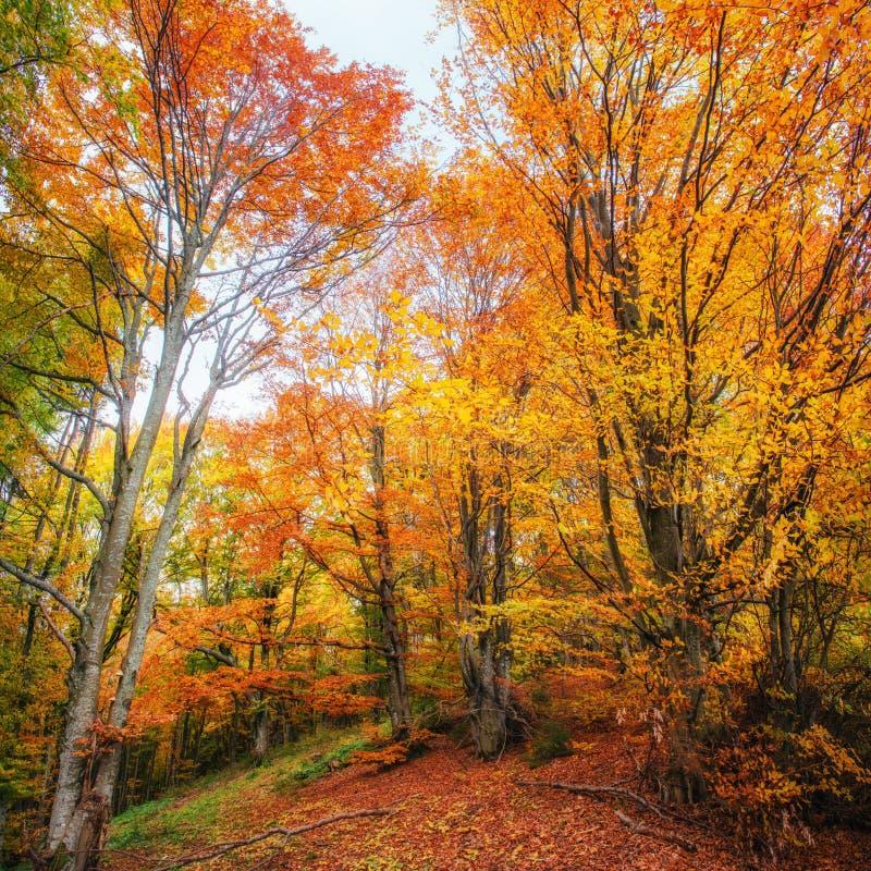 Дорога леса в осени стоковые фотографии rf