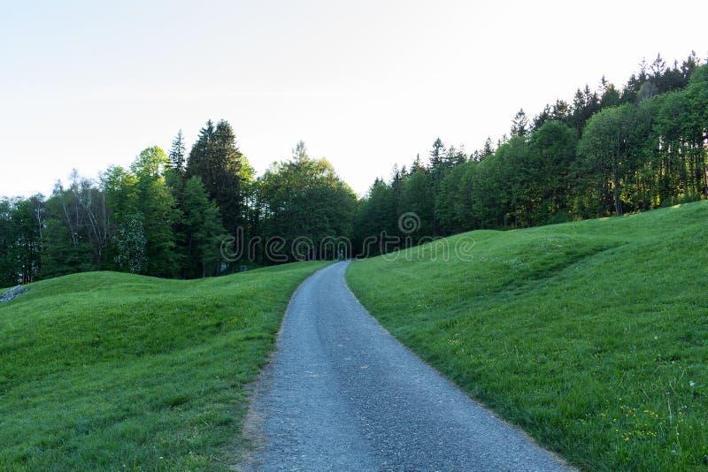 Дорога леса идя через сосновый лес стоковая фотография rf