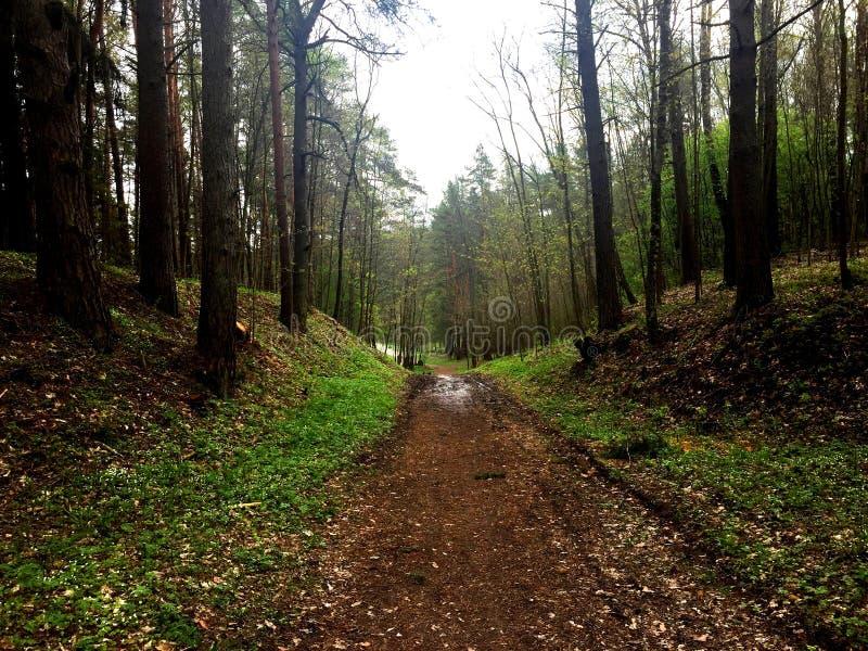 Дорога леса после дождя весной стоковое фото rf