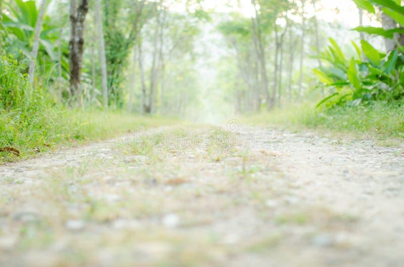 Дорога леса с мягким фокусом стоковые изображения