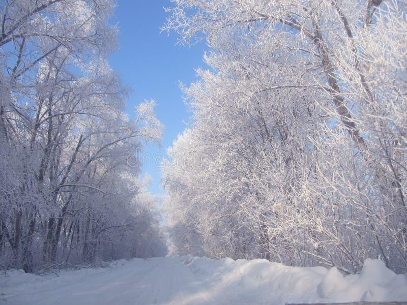 Дорога зимы в деревне стоковая фотография