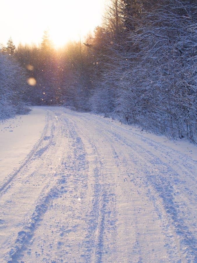 Дорога зимы через лес стоковая фотография rf