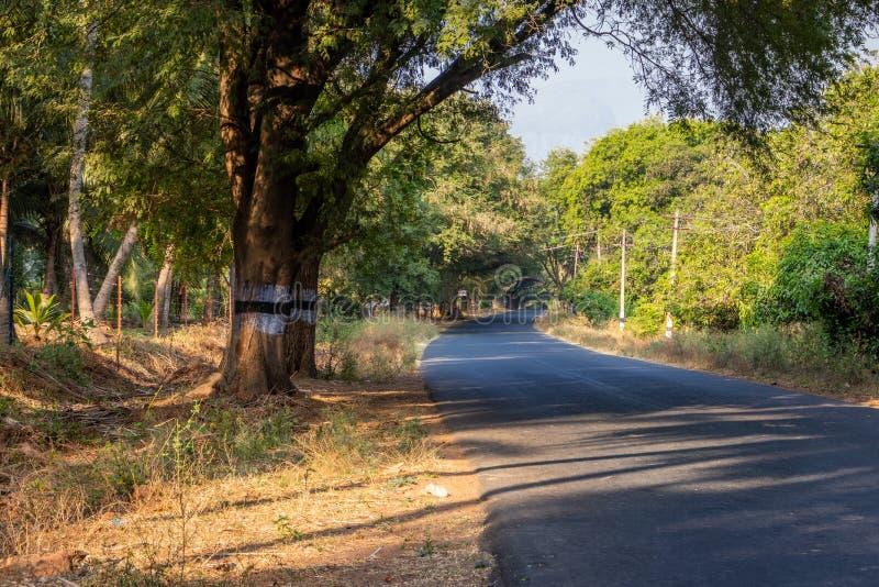Дорога изолированная с зеленым покрытым деревом стоковое фото rf