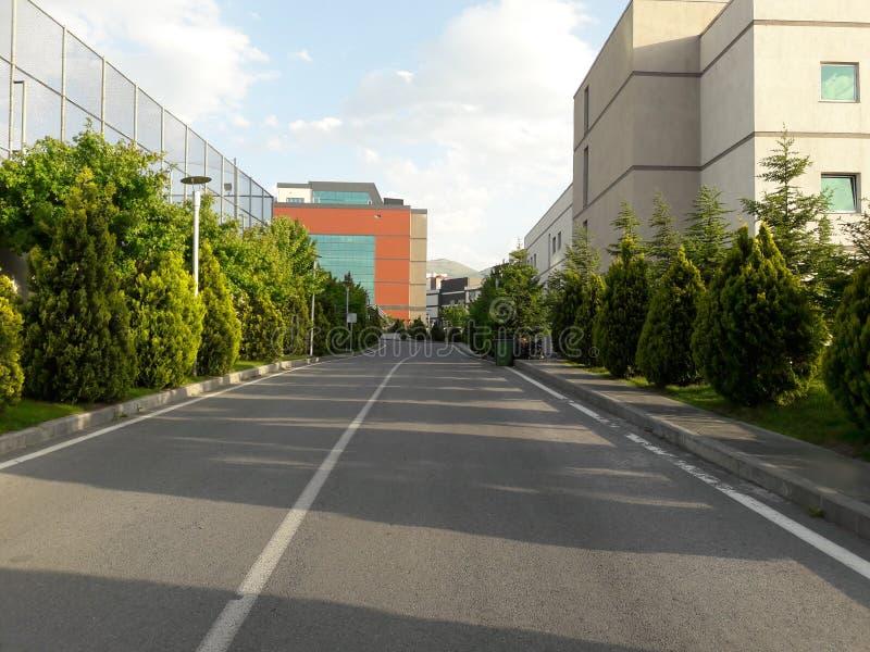 Дорога и деревья стоковое изображение rf