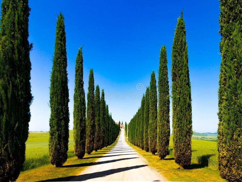 Дорога и кипарисы в Кр Сенезе, Италия стоковые изображения rf