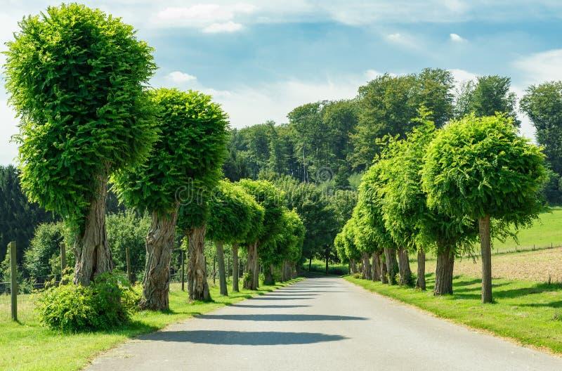 Дорога и природа стоковые фотографии rf