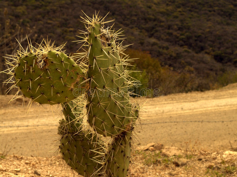 дорога кактуса стоковая фотография rf