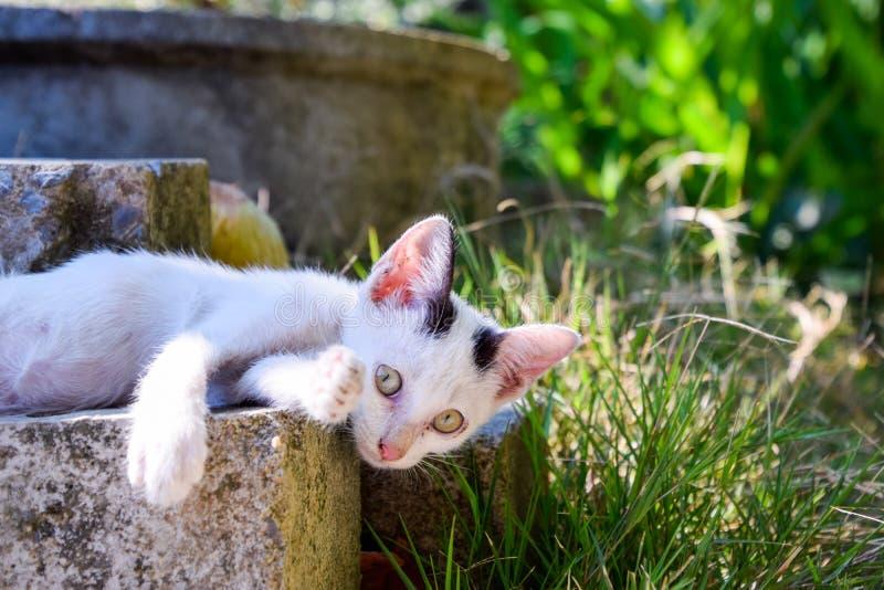 дорога котенка бежит белизна стоковое фото