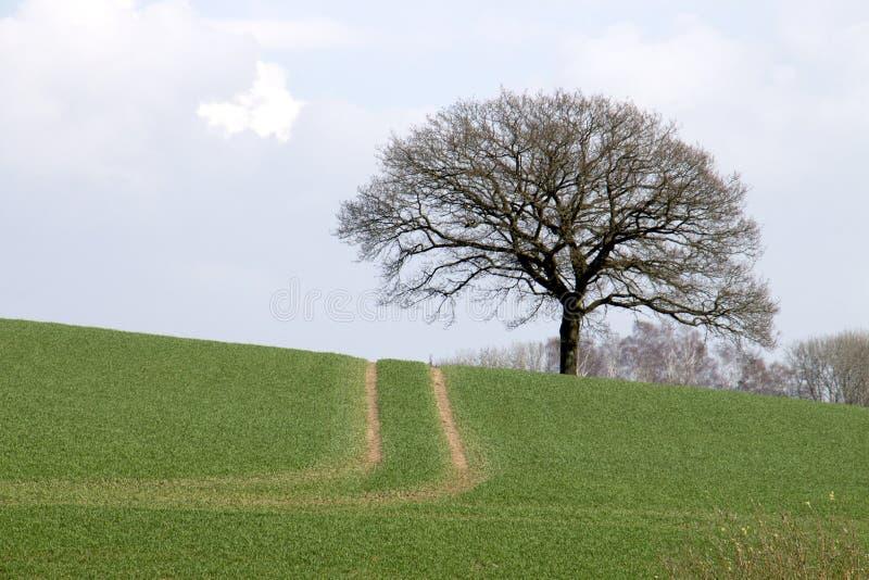 Дорога к дереву стоковые фото