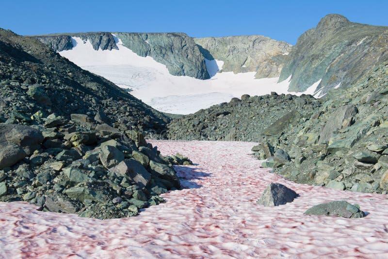 Дорога к леднику IGAN Приполюсное Ural, Россия стоковые фотографии rf