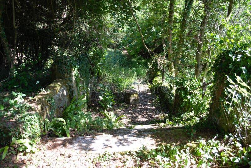 Дорога к нигде в Savernake стоковое фото rf