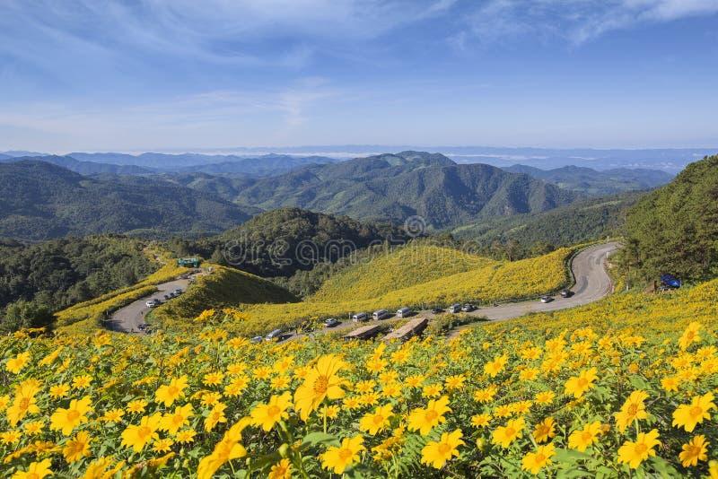 Дорога к полю желтого мексиканского солнцецвета полет на mo стоковое изображение