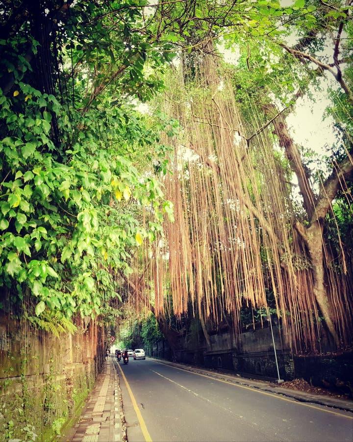 Дорога к Ubud, Бали стоковое фото rf