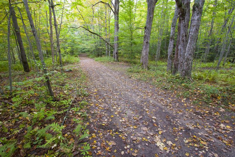 Дорога леса в Вермонте, США с упаденными листьями стоковые фотографии rf
