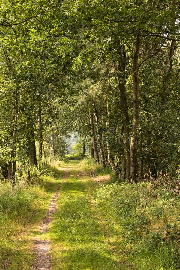 Дорога леса в Kampina, зоне природы в Нидерландах стоковые фото