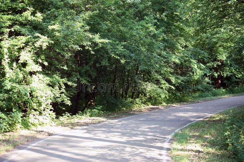 дорога леса для jogging или задействовать в солнце стоковые изображения rf