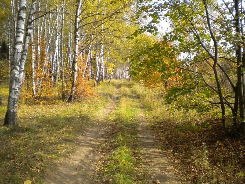 Дорога леса осени, красивый ясный день стоковое изображение rf