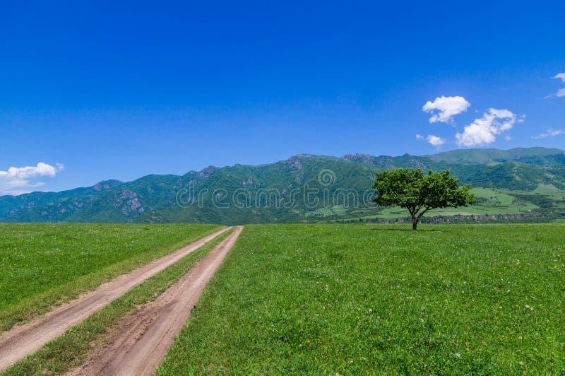 Дорога лета луга дерева голубого неба поля стоковые изображения