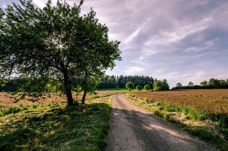 Дорога между полями клевера стоковая фотография rf