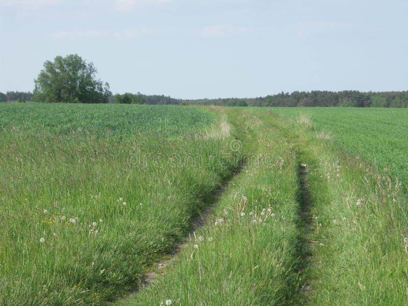 Дорога между лугами стоковые фото
